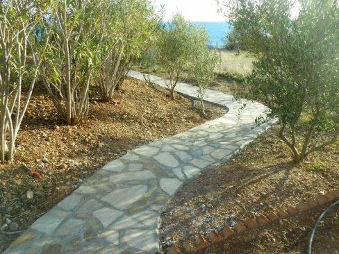 path through olive trees to the sea